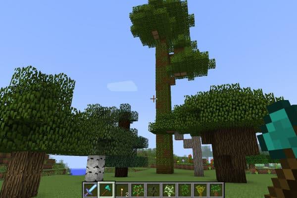 木材画像2
